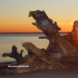 Isn't Driftwood Fascinating? Image by Rick Rice