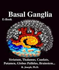 Basal Ganglia - best known for facilitating Voluntary Movement Google Images