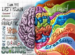 Graphic of Brain showing divisions activity Google Images