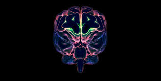 Graphic of Brain with Neon Highlights - Google Images