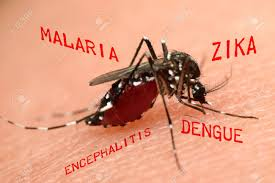 Mosquito surrounded by the names of diseases it spreads, malaria, zika, dengue Google Images