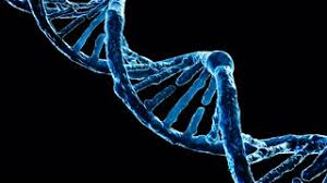A strand of DNA Google Images
