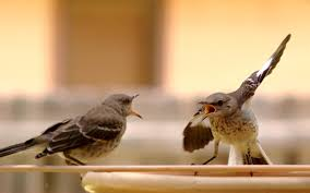Birds of a feather argue together Google Images