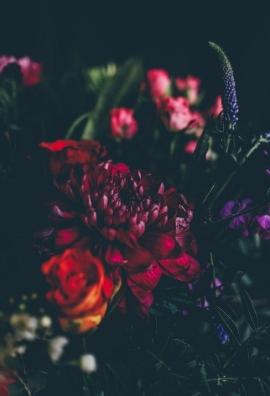 ANNIE SPRATT RED ROSES