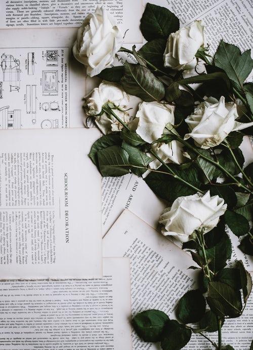 ANNIE SPRATT WHITE ROSES