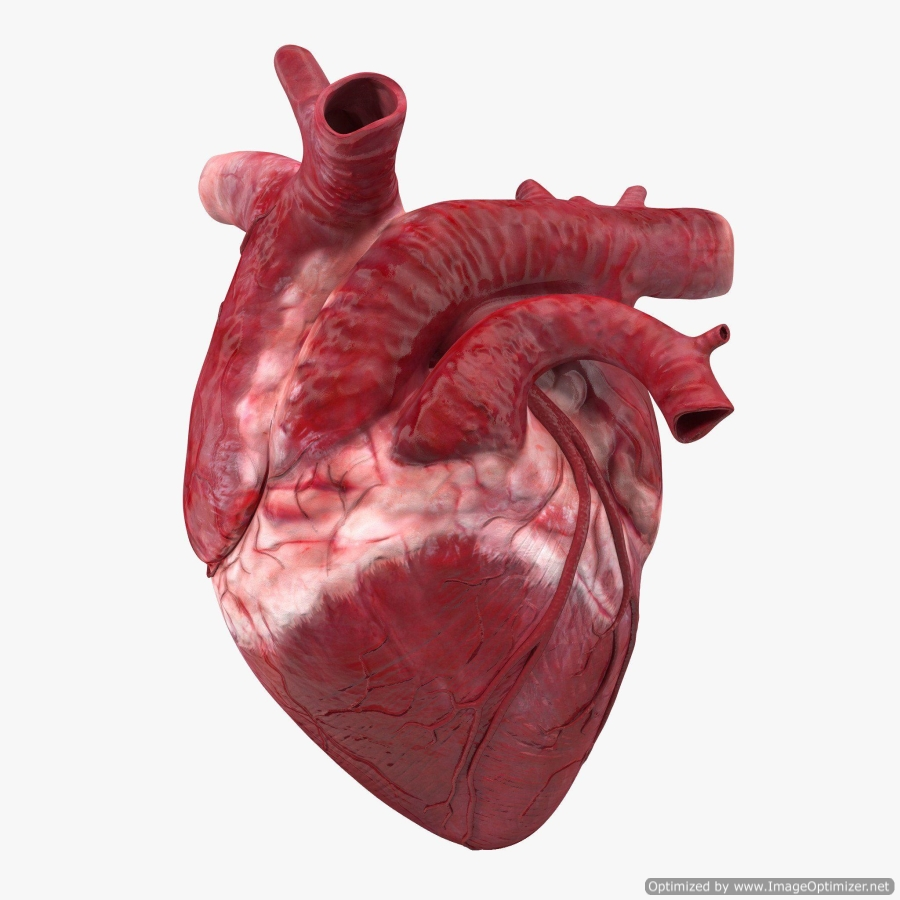real image of a heart